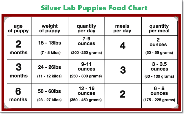 Silver Puppy Food Guide
