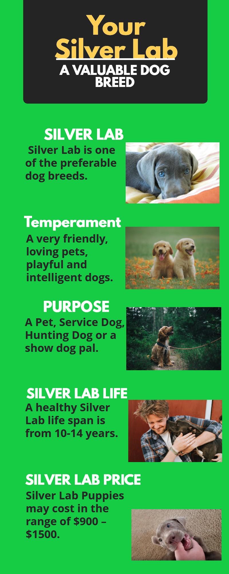 Highlights of the Labrador Dog Breed