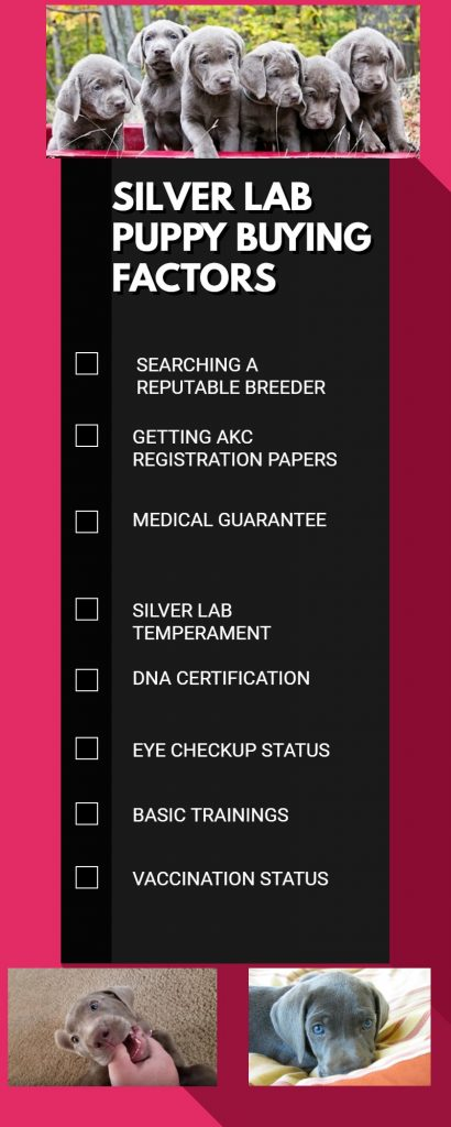 SILVER LAB BUYING CHECKLIST
