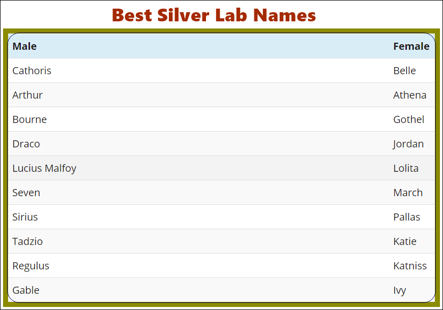 Silver Labrador Retriever Names