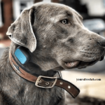 Silver Lab Price | Lab Puppies, Names for 2021 [Big Discount]