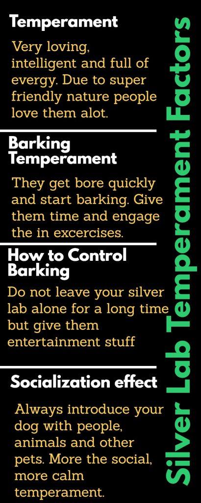 Silver Lab Temperaments