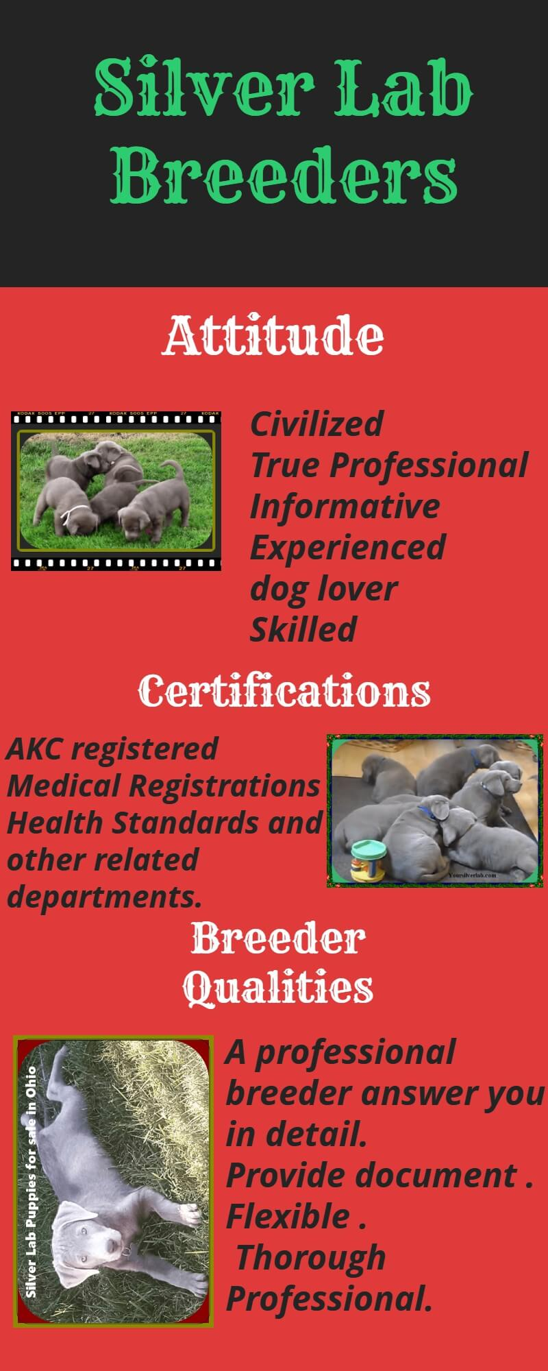 Silverlab Breeders Question points