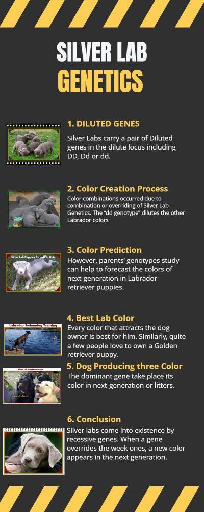 Silver Lab Genetics Information