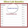 Silver Lab Genetics Study