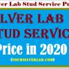 Silver Lab Stud Service Price