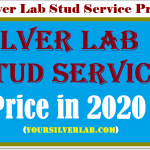 Silver Lab Stud Service, Medical Tests, Stud Dog Qualities & Price in 2020