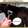 Silver Lab Care