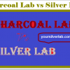 Charcoal Lab vs Silver Lab Differences