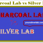 Charcoal Lab vs Silver Lab | Genetic difference, Temperament, Life Span