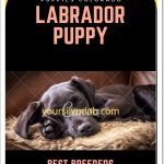 Labrador Retriever Puppies Ohio-Best Labradors Breeders / Sellers Ohio