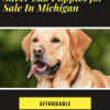 Silver lab puppies for sale in Michigan
