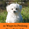 Ways to Prolong Your Pet's Life