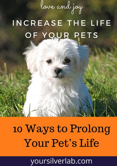 Ways to Prolong Your Pet's Life