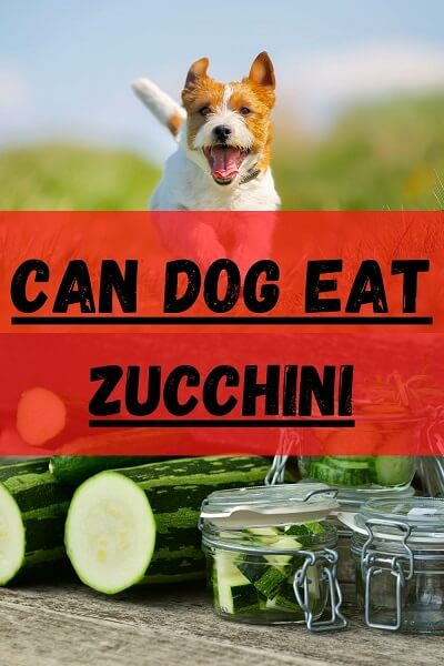 Can dogs eat zucchini guide