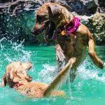 Dog Park near me - Top 10 Dog Parks near me in USA 2021